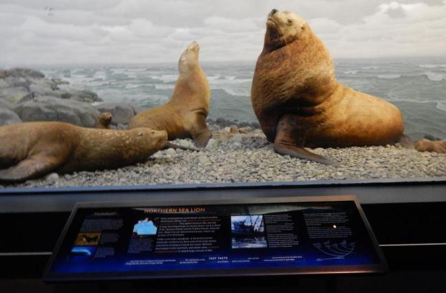 Museu de História Natural - Vida marinha