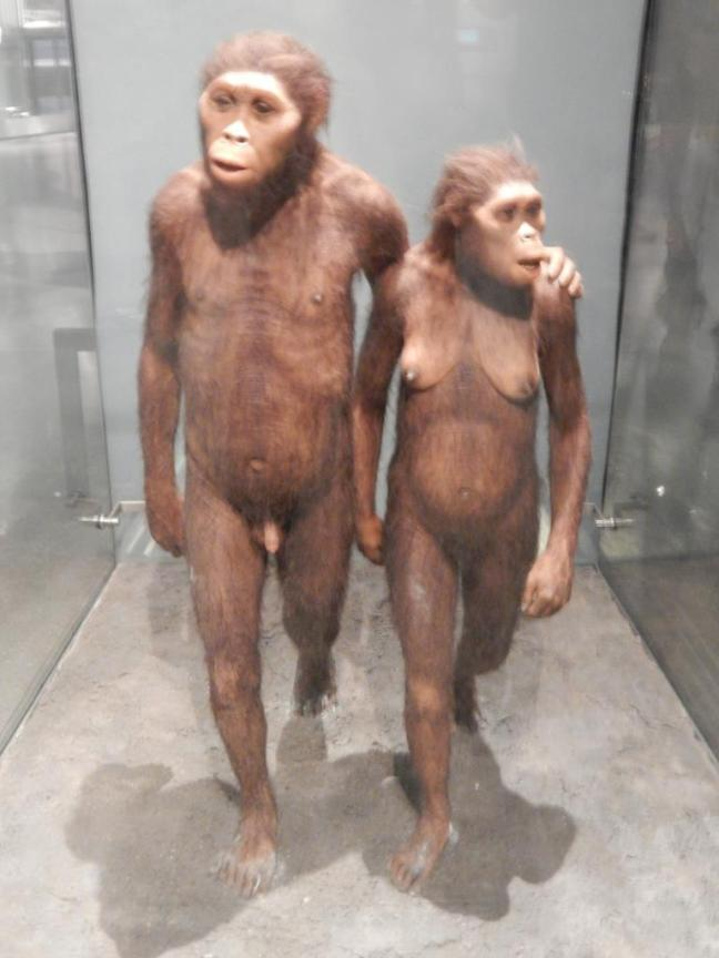 Museu de História Natural - Evolução