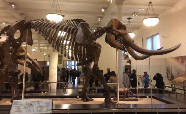 Museu de História Natural - Dinossauros